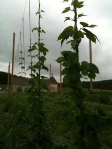 hop_farm