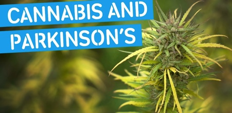Parkinson's and Cannabis