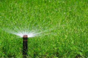 29468807 - automatic sprinkler watering grass