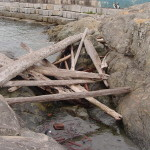 Dallas Road Victoria Driftwood at Breakwater