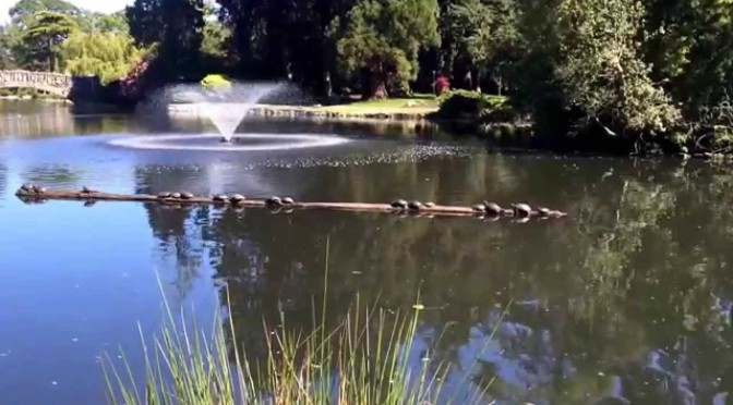 Beacon Hill Park Victoria – Video – Gingerbread Cottage