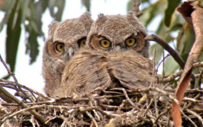 San Diego Regional Urban Forests Council Newsletter