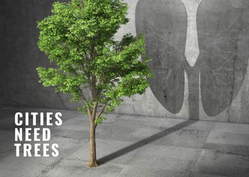 CITIES NEED TREES
