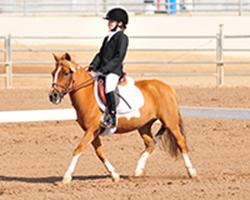 Barbara Stine Junior Rider Scholarship Announcement