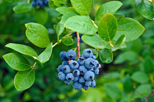 Blueberries are just one type of seasonal produce that you can make into a delicious, healthy meal.
