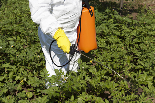 The Dirt On The Dirty Dozen: Why Pesticides In Vegetables Matter