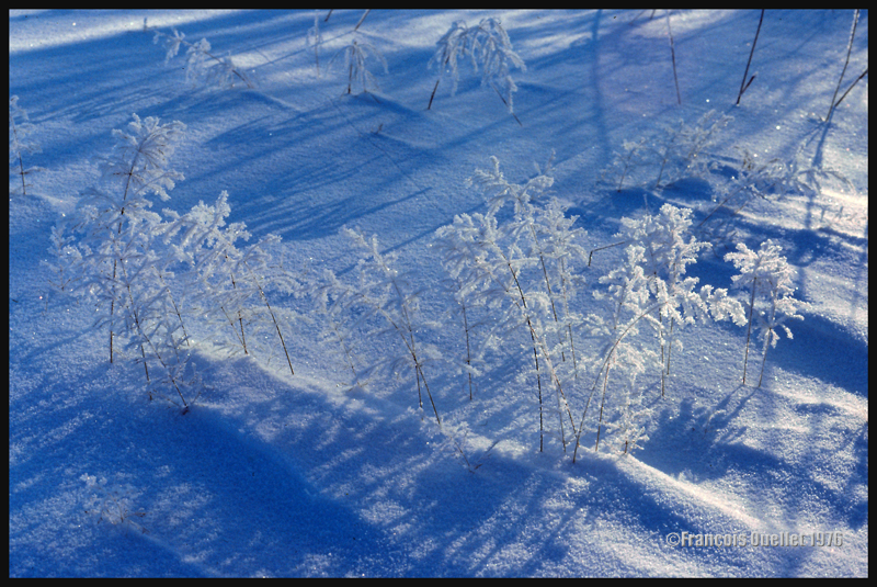 Neige et gelée blanche se combinent dans cette photo prise en 1976.