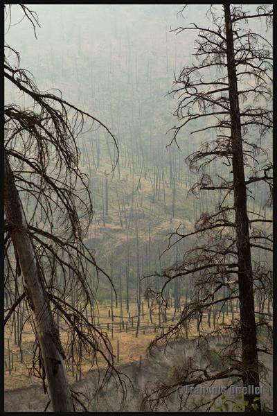 Région dévastée par les feux de forêt de 2014 près de Kamloops, Canada
