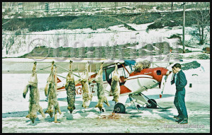 Super Cub and wolves shot from the air in Northern Ontario, Canada, on an aviation postcard dating from the sixties.