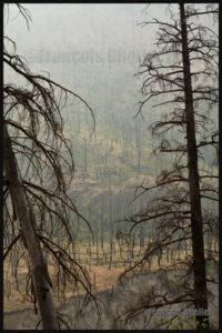 Forêt incendiée de l'Ouest canadien en 2014