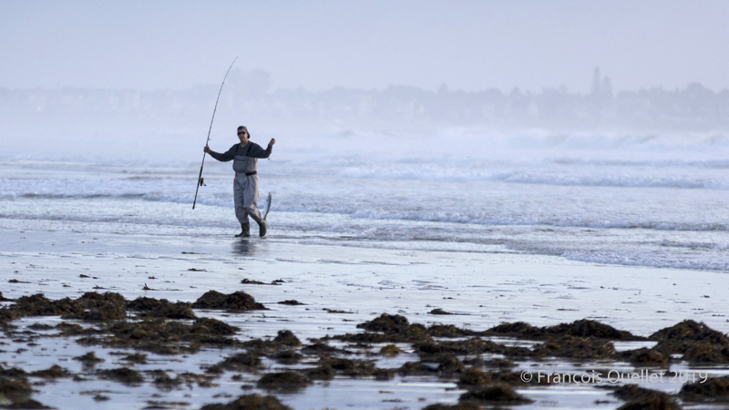 Ogunquit fisherman with Atlantic Striped Bass web