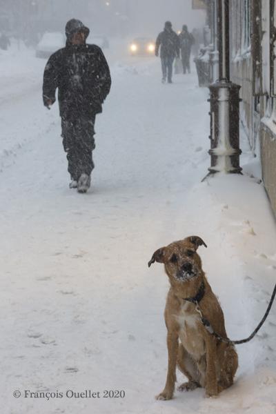 Un chien attend son maître dehors durant une tempête hivernale en 2020.