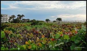 2011h-Floride-Web