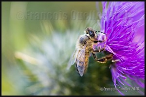 Bee-at-work-on-a-flower-web