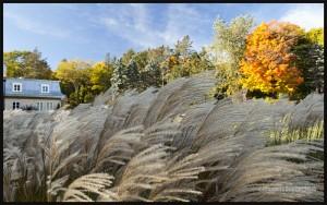 IMG_8514-Parc-du-Bois-de-Coulonge-Québec-2015-web