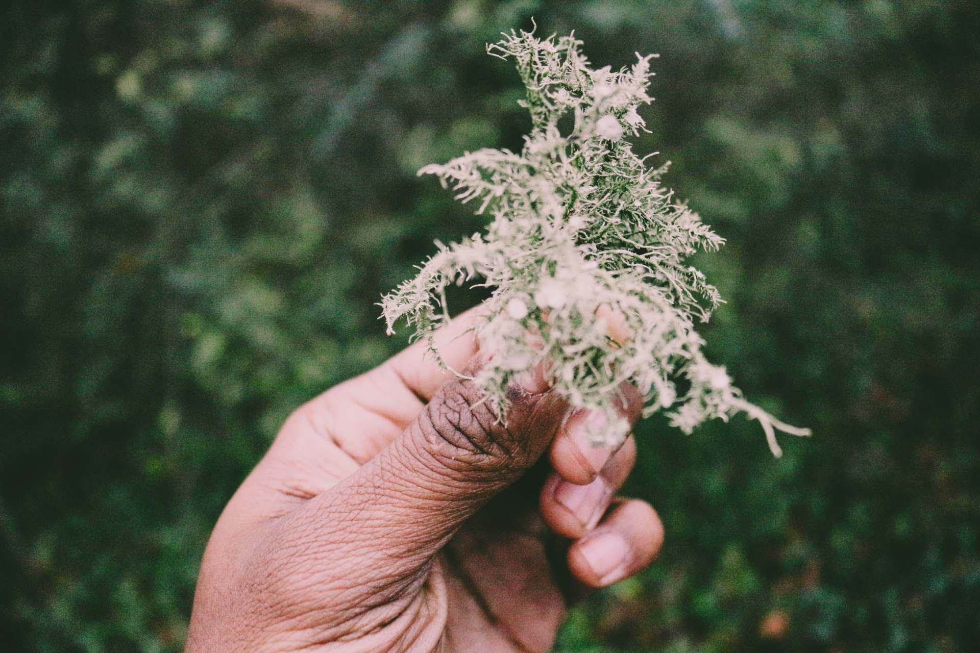 8 Categories of Herbs