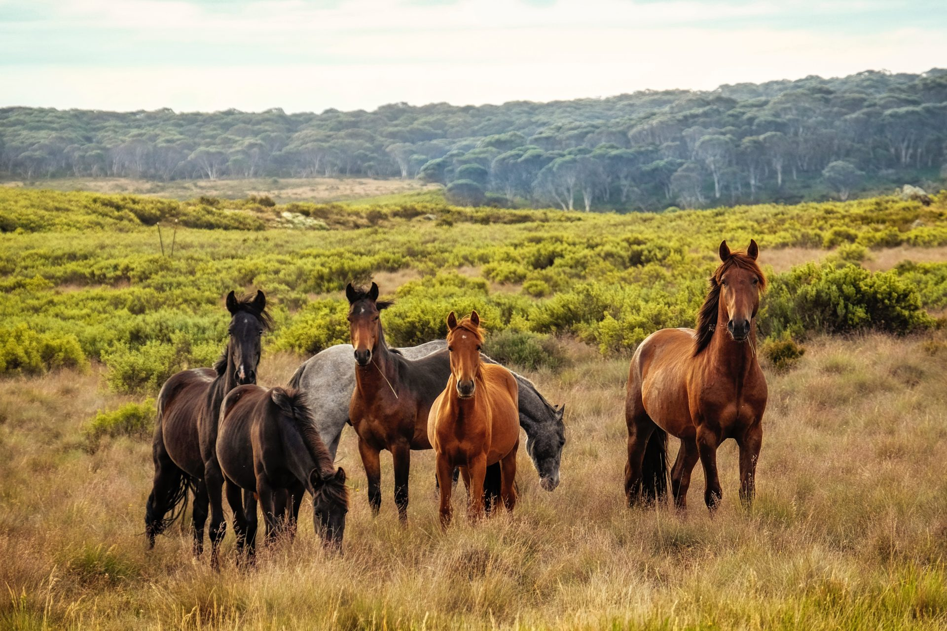 Essential Oils to Help Equines