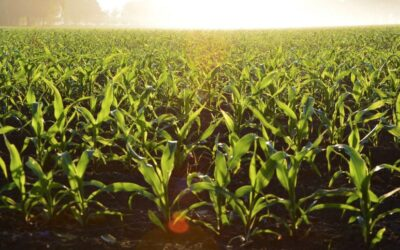 $15 Million in Agricultural Safety Grants