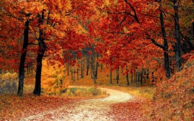 DNR: celebrate the glory of Michigan's fall color