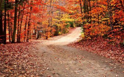 Enjoy fall colors DNR-style
