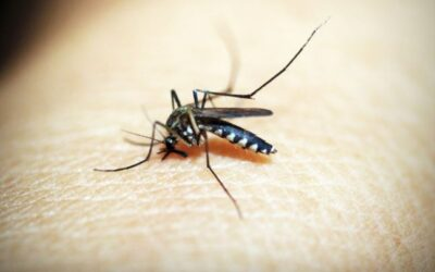 Residents urged to protect themselves from mosquito bites