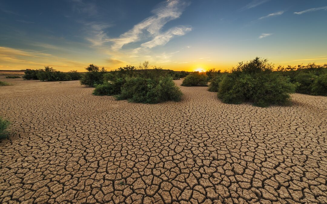 A Widespread Drought: Legal and Other Challenges of the Association