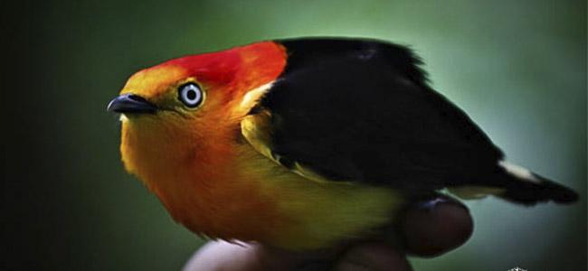 avistamiento de aves 03