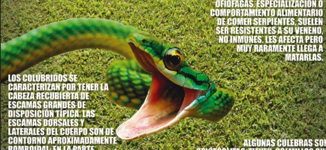 serpentario 01