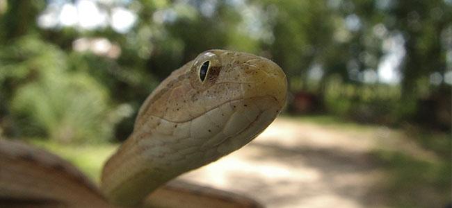 serpentario 02