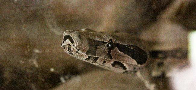 serpentario 03