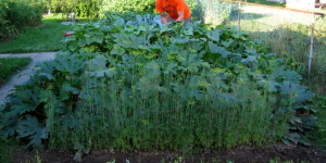 Gardening Tips for your Back