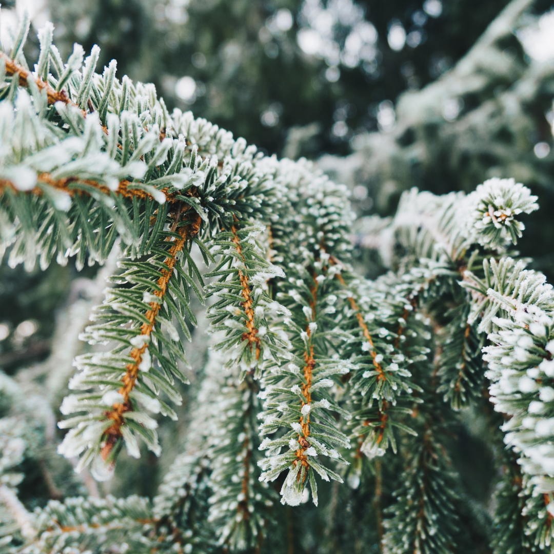 7-Day Change of Season Cleanse