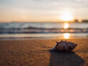 Summer Sea Shell