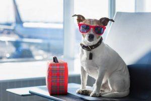 As regras de aviação para viajar com animais de estimação