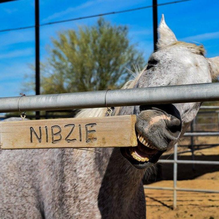 nibzie-2
