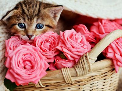 adopt-cat-cropped-insert-2