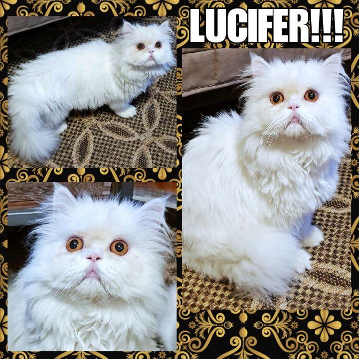 Lucifer!!