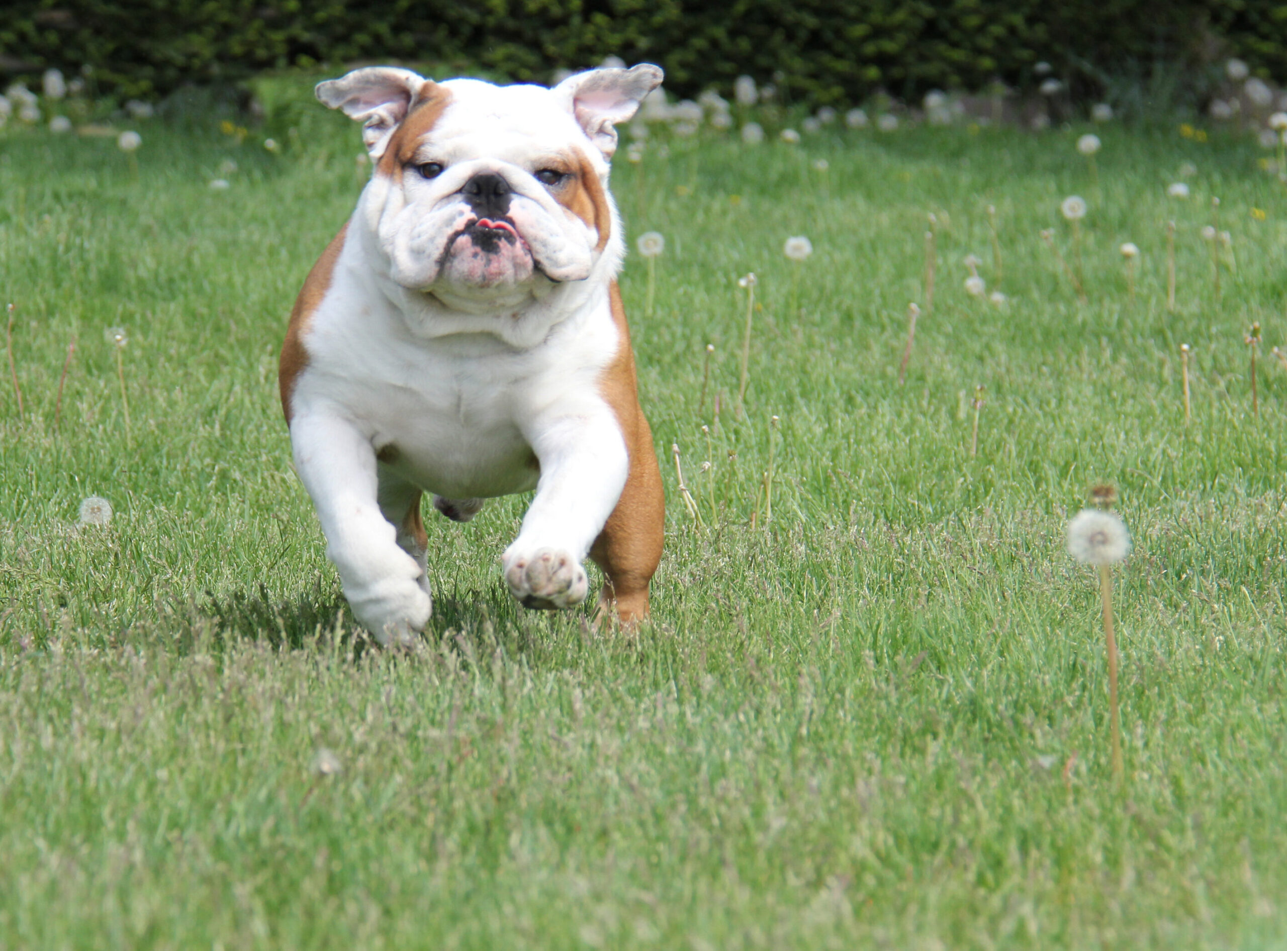 A clean yard allows your dog to run free.  You have been Scooped!
