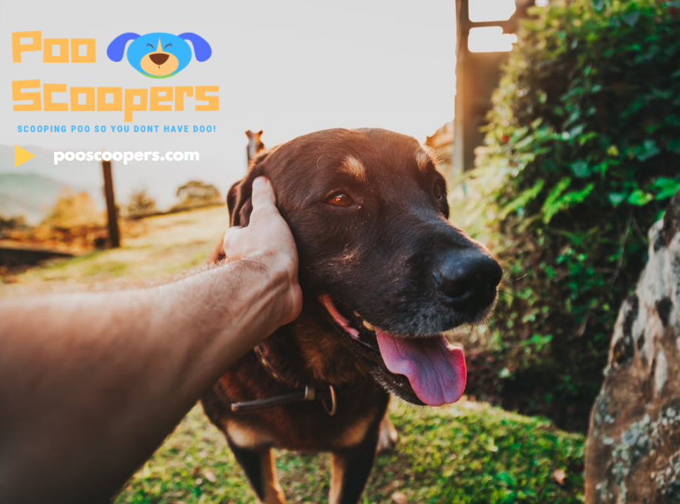 Making Your Dog Happy with Poop Scooping and Pet Waste Removal
