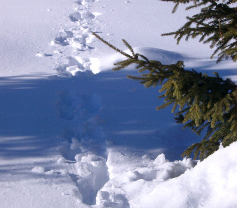 Walking (and Slipping and Falling) in a Winter Wonderland