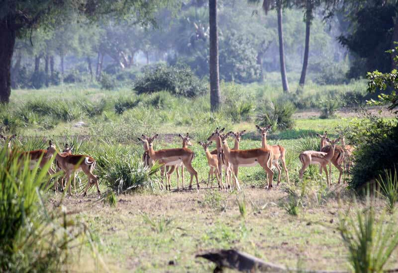 Ashtanga_Yoga_Dubai-Zambia_Deer-1