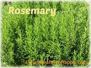 rosemary_opt (1)