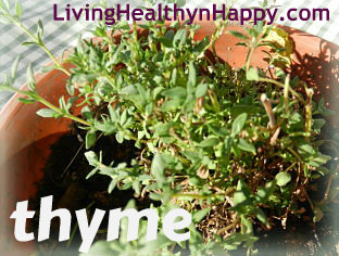 thyme_opt