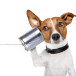 contact for dog training