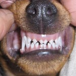 puppy biting can be improved with training!