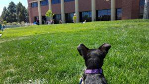 puppy watching kids