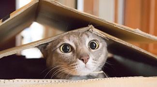 Cat in a cardboard box