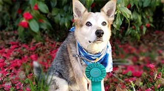 Dog with blue ribbon