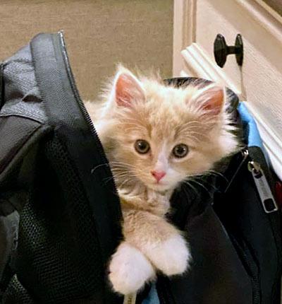 kitten ready to travel