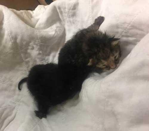kitten season in new york city